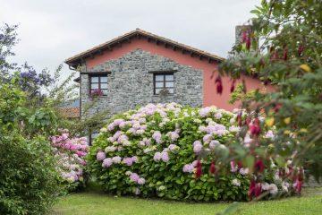 Macizo de hortensias en los jardines